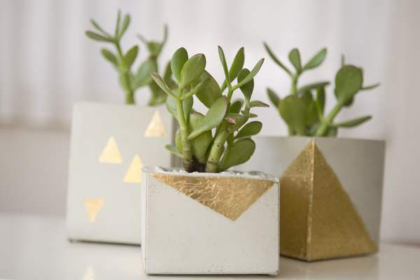 Several Green plants which is Placed in White Cube Concrete with Several Golden Paper Ornament